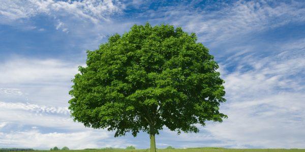 วิธีปลูกต้นไม้
