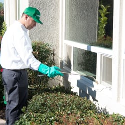 24-What To Expect Out Of A Pest Control Roseville Company